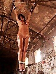 free big boobies torture