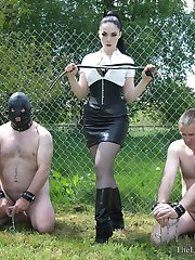 Bullwhipped To Contrition