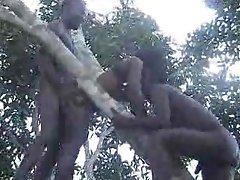 real africana amador foda na árvore parte 2