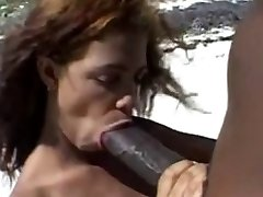 Liels, brūns sprauslas &Big brown gailis uz pludmali