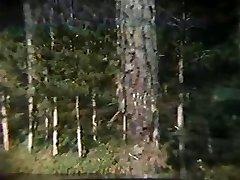 Koroško Alucinante - brazilski letnik