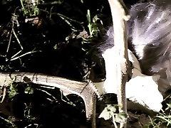 विक्षिप्त - अंधेरे बुत shemale mature shagging बंदी संगीत वीडियो