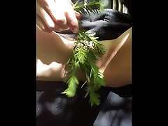 Pushing evergreen needles into juicy pussy while hiding in a bush, close up