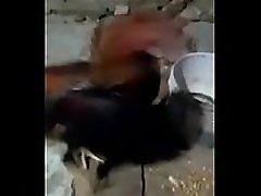मैक्सिकन आदमी से अनुसंधान एवं iacuteo bravo छू उसके बड़े मुर्गा