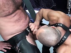 Hairy mature bear getting his ass drilled