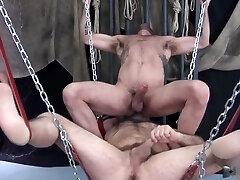 2 Bears fucking on sling