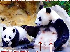 黒人チン子ダンス【Black dick American&Nipple Japanese&hentai Panda/dick dance】