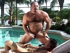 Poolside Bears
