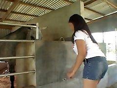 Equitación polla Asiática en los establos