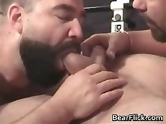 Faggot bears pumping iron and sucking cock part2