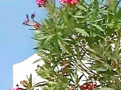 Santorini Heatwave - Scene 2